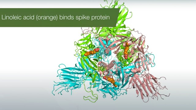 SARS-CoV-2 Spike | Video credit: University of Bristol