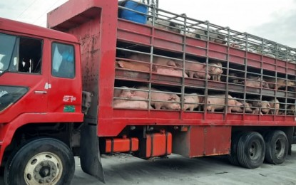 3.7K live hogs from W. Visayas to arrive in NCR Wednesday