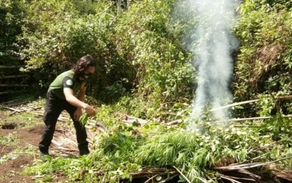 2 marijuana plantations in Sulu torched