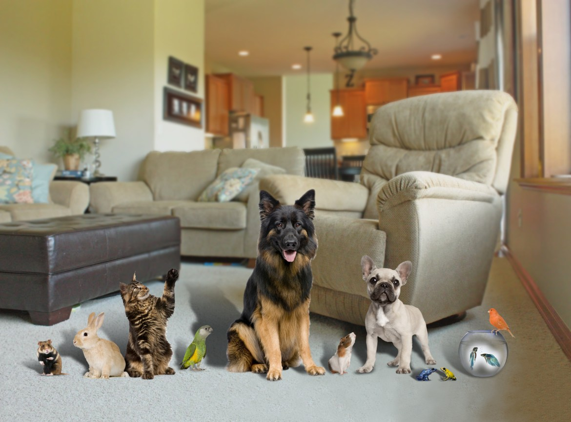 A HOUSEFUL OF PETS DON'T HURT