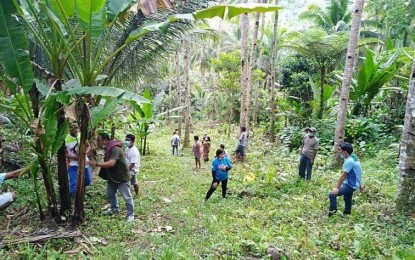 Coco-abaca intercropping in Region 8 covers more areas