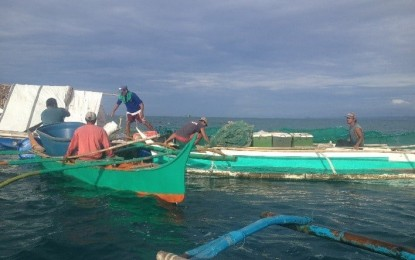 Red tide expands in Eastern Samar; remains in 5 bays