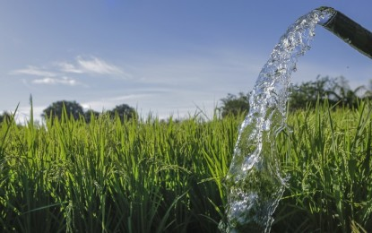 DA-PhilRice urges farmers to conserve water