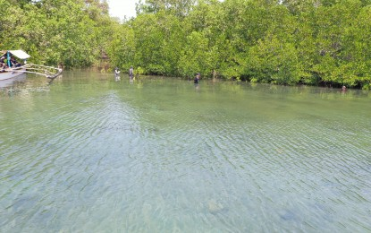 Mangrove conservation bill hurdles House committee