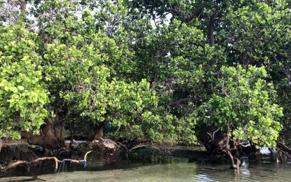 GenSan steps up protection, conservation of mangrove forest