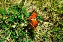 Butterfly - Kelebek