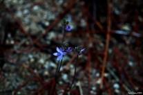 Flower - Çiçek