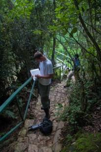 Travis Hagey and Yoel Stuart helping measure anole habitat use - Cordillera Central, Dominican Republic