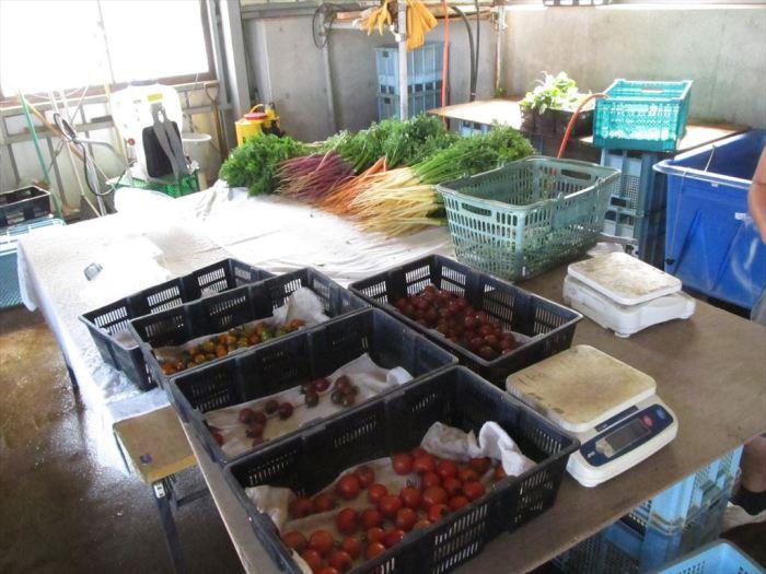 野菜商品化
