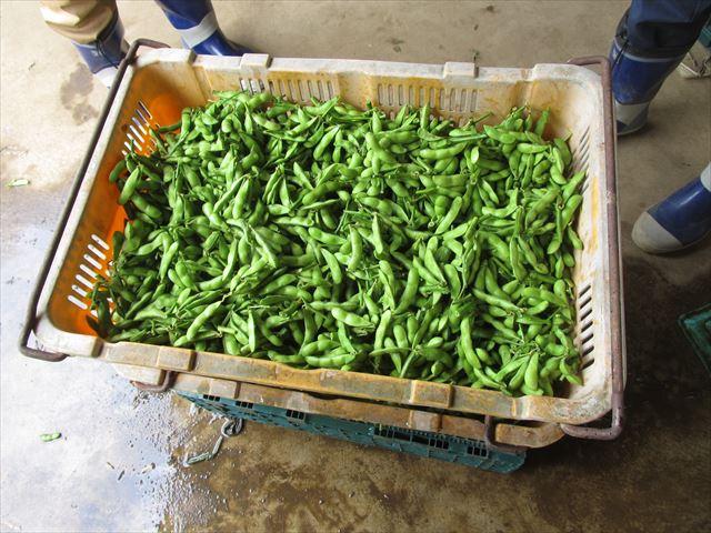 洗った枝豆