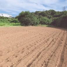 2018年8月18日 福姫会【渡邉農園】援農ボランティアin神奈川県三浦市