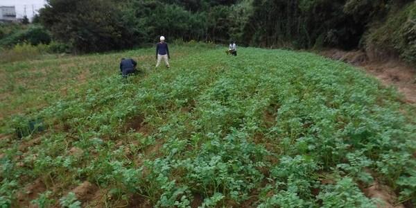 2018年10月13日 福姫会【渡邉農園】援農ボランティアin神奈川県三浦市