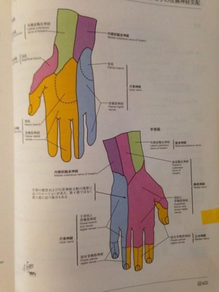 手のひらの痺れの治療|福岡県福津古賀宗像北九州市