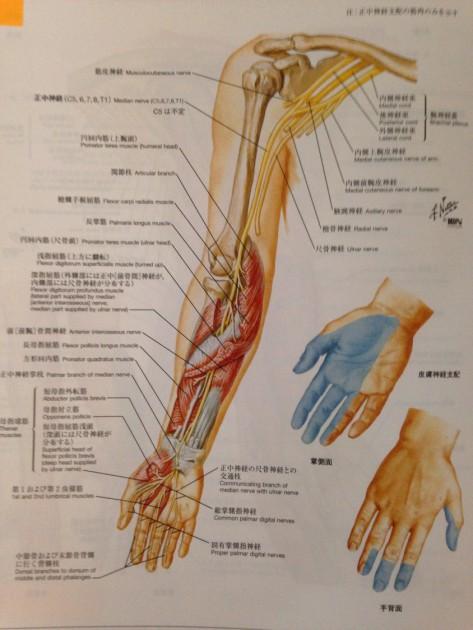 頚椎の手術後の腕の麻痺について