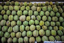 Singapore, fruit, Durian, market, fresh