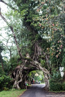 forest, old tree mountains, travel, bali