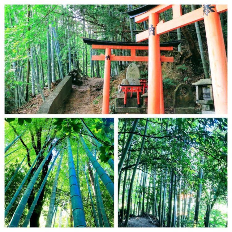 Fushimi Inari Bamboo Forest