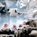 Review of Snow Monkeys Onsen at Jigokudani 2020