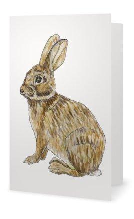 Rabbit: Sylvilagus floridanus