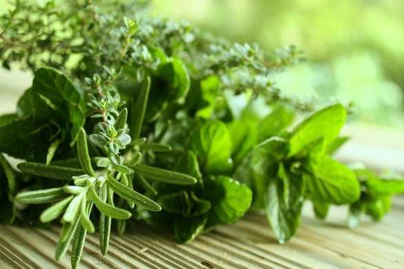 Hero-Image-Healthy-Herbs-from-Green-Blender-1024 x 768