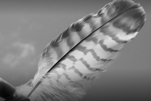 feather_bw