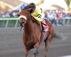 Quality Road shown winning the Feb. 28 Fountain of Youth Stakes