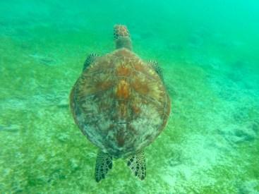 Turtle point - Gili Trawangan - Lombok