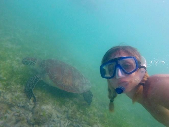 Tartarughe marine - Gili Trawangan - Lombok