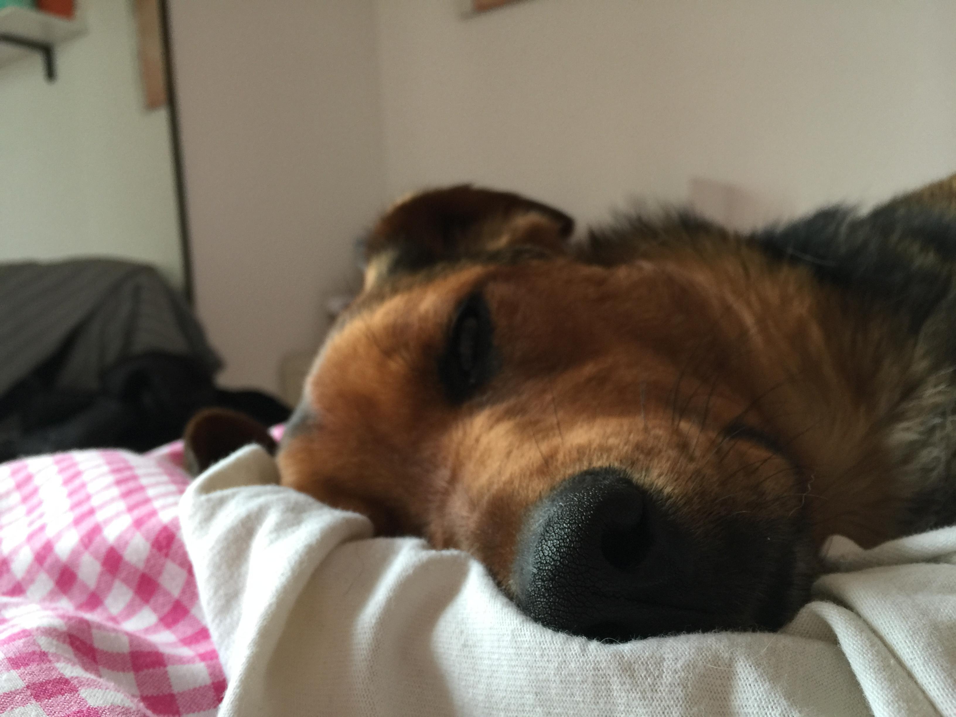 non far salire i cuccioli su letti e divani