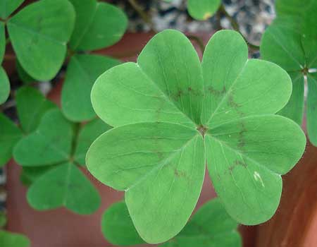 5 Ways to Prepare Your Home for St. Patrick's Day