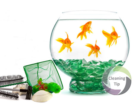 How to Clean Fish Tank