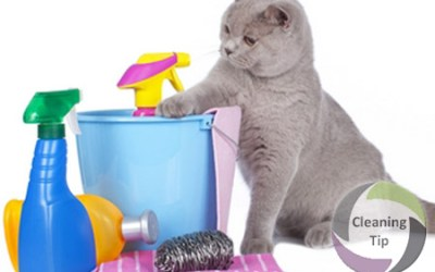 How to Clean Up After Cats