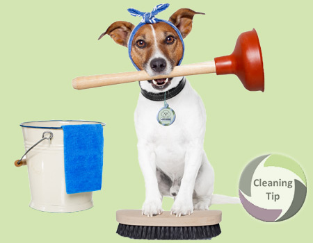 dog clean up