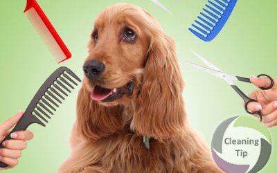 How to Groom a Pet