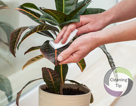 Learn How to Clean Plants