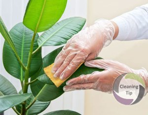 How to Clean Plants
