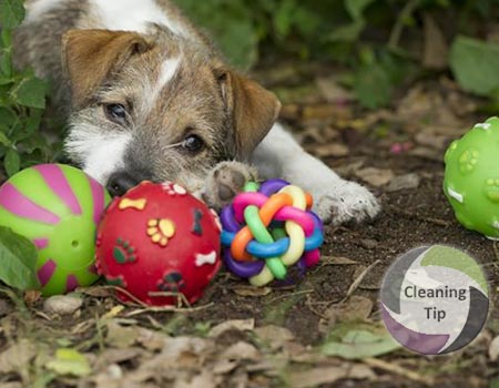 How to Clean Pet Toys