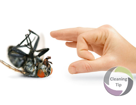 Pest Prevention and Removal