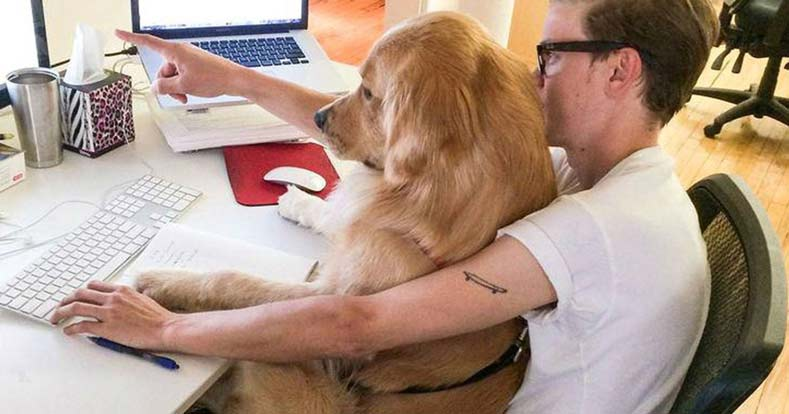 Celebrate Take Your Dog to Work Day