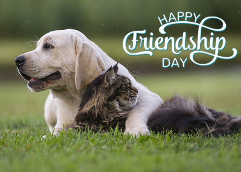 Spend Time Together on Friendship Day