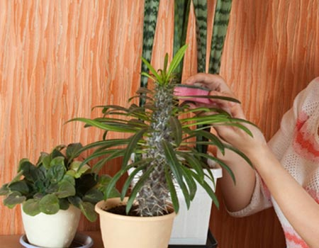 Cleaning Live Plants to Keep Them Healthy. Two Quick Tips!