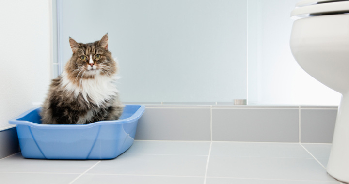 How to Clean a Litter Box and make it clean and fresh for you cat