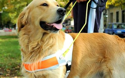 Helping Our Four-Legged Friends on Assistance Dog Day