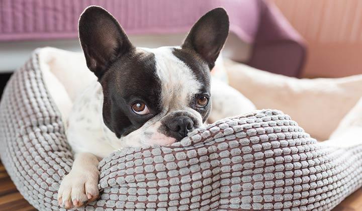 Clean Dog Gear Bedding