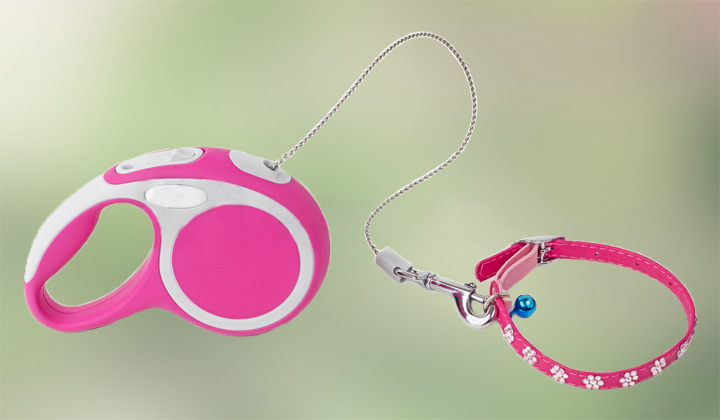 Clean Dog Gear leash and collar