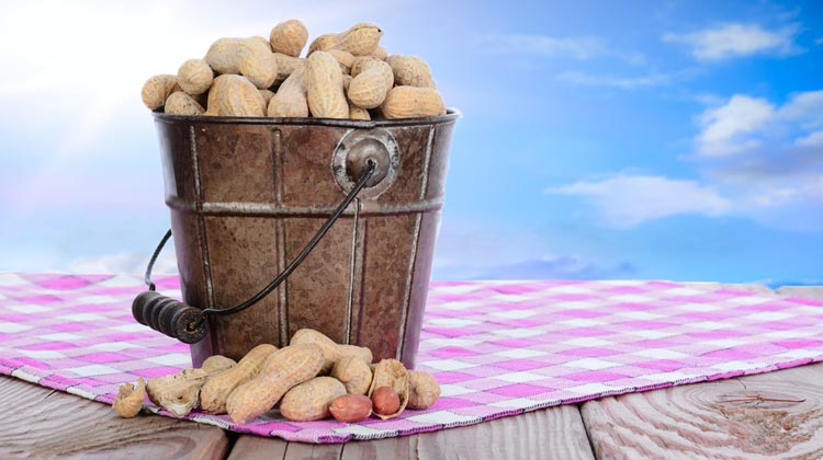 National Peanut Day: A Day of Nutty Fun so Get Crackin'