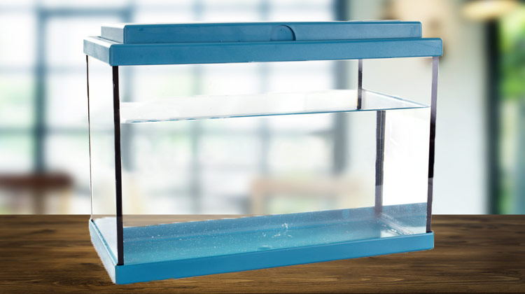 Use This Easy Process to Safely Clean an Aquarium and add fresh water