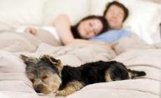 chien dort dans le lit