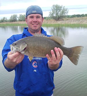 Smallmouth Bass caught on the Missouri River i...