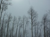 The aspens were gorgeous, despite the cloudy, stormy skies.